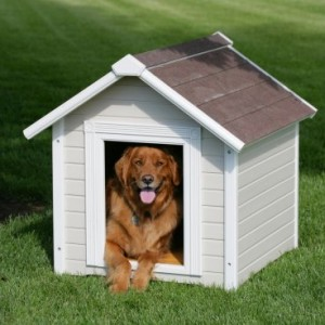 Basic House Rules For Dogs